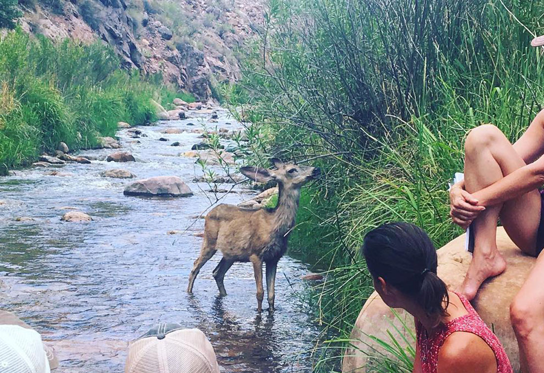 Deer in the grand canyon - Live Boldly Coaching